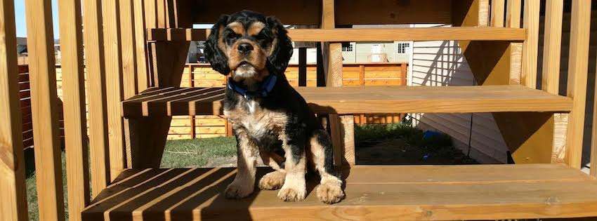 """Kerusso blogger Liz Sagaser's new puppy Cosmo. Cosmo's """"dogged faith"""" and unconditional love for Liz and her family have been reminding Liz of the faith she desires to have daily in her walk with God, she writes."""